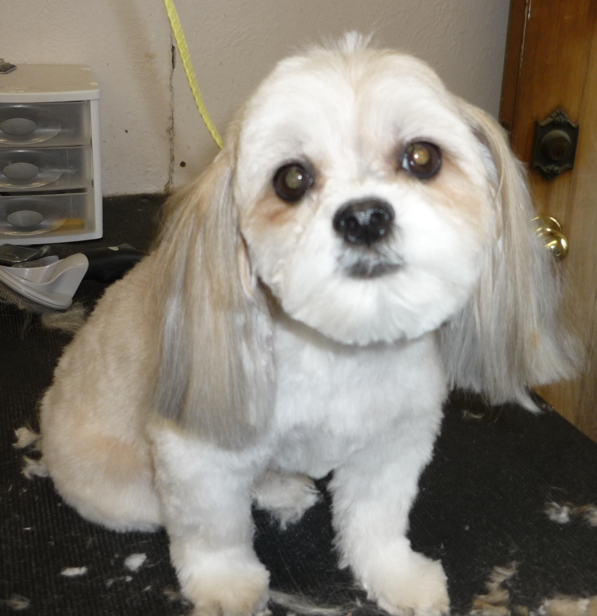 Dog Haircut Styles Viewing Gallery